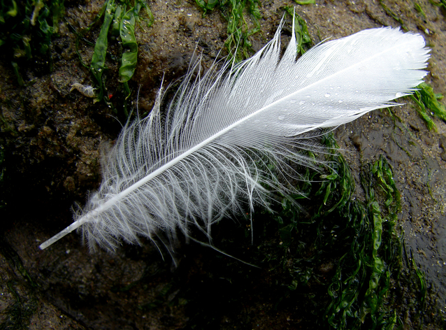 feather-on-the-beach-1163155-638x471