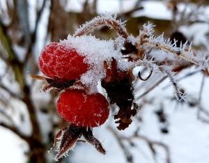 winter-3880241_1280