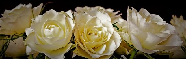roses-2198156_1920 (1)